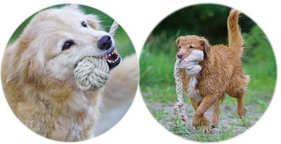 Jouets en fibres végétales pour chiens