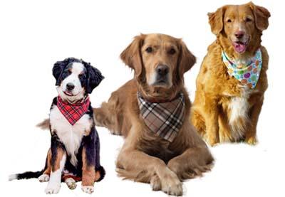 Bandanas réversibles en coton pour chiens