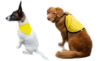 Gilets et vestes jaune pour chiens