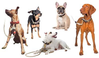 Bannière colliers chiens